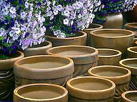 Pots and petunias.