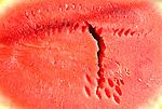 Lewisburg Farmers Market. Watermelon close-up.