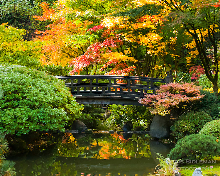 Moon Bridge in strolling pond garden (chisen kaiyu shiki niwa) of Portland Japanese Garden with Fall colors in trees of red, yellow and orange