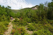 Hikers on the Timber Camp Trail in the White Mountains, New Hampshire USA. This area was logged during the Mad River Logging Era.