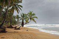 Beach with palm trees at Las Terrenas, on the North East coast of the Dominican Republic, in the Caribbean. Picture by Manuel Cohen