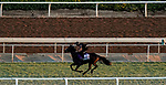 October 31, 2019: Breeders' Cup Juvenile Turf Sprint entrant A'Ali, trained by Simon Crisford, exercises in preparation for the Breeders' Cup World Championships at Santa Anita Park in Arcadia, California on October 31, 2019. John Voorhees/Eclipse Sportswire/Breeders' Cup/CSM