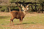 Golan Heights. Odem Deer Forest