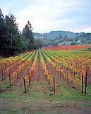 USA, California, scenic view of a Calistoga vineyard in the Napa Valley