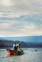 Subsistence fishermen check net while fishing for King salmon on the Yukon river, interior Alaska.