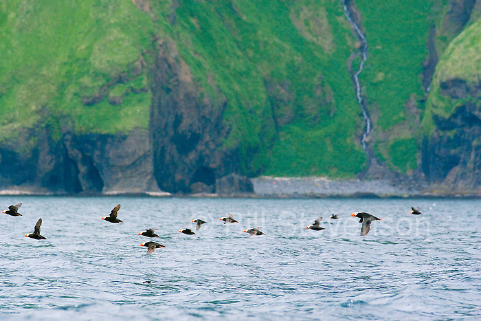 We passed huge flocks of Puffins. This part of the world is seemingly from a time before man had such a destructive impact.