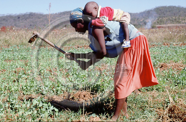 (96/39/06)-CA Shamrock-Chegutu-Zimbabwe - June 27, 1996---A woman/mother carrying her child while working/weeding on a plot with peas; FNS/SAN, agriculture, rural, labour---Photo: Horst Wagner/eup-images