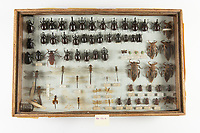 Collection of insects collected in S.E. Asia during the Vietnam War by Robert Huntsman and donated to the Alaska Museum of Sciene and Nature.