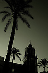 Palm trees silhouetted against the night sky in Cadiz
