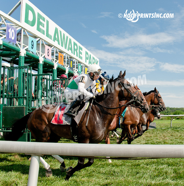 Persnickity winning at Delaware Park on 8/10/13
