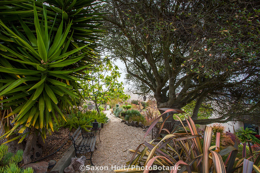Path under Oak tree in California hillside garden;