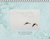 "Cover of the 2014 Birds of a Feather Calendar. The cover photo is called ""Sandhill Crane Duo Flight"".  Two Sandhill Cranes (Grus canadensis) are in flight against a gray sky with a herd or sometimes called a construction of cranes in flight in the background."