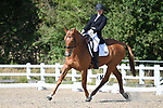 Stapleford Abbotts. United Kingdom. 08 September 2019. Class 7. British dressage. Brook Farm training centre. Essex. UK.~ 08/09/2019.  MANDATORY Credit Garry Bowden/Sport in Pictures - NO UNAUTHORISED USE - 07837 394578