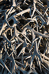 A stack of  shed elk antlers in the National Bison Range in western Montana