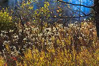 Backlit fall vegetation