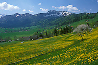 AJ1674, Switzerland, Appenzell, Europe, Scenic view of the hilly grasslands filled with dandelions and high meadows that lead up to the alpine mountains in Urnasch in the Canton of Appenzell in the spring.