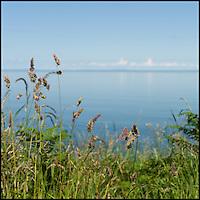 Calm sea through grass