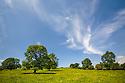Landscape dominated by Ash trees {Fraxinus excelsior}, Peak District National Park, UK, Derbyshire. June.