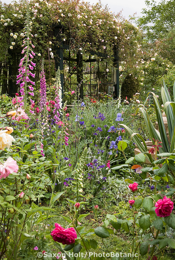Country cottage garden with roses, biennials (foxglove) and perennials, Fickle Hill Old Rose Nursery California