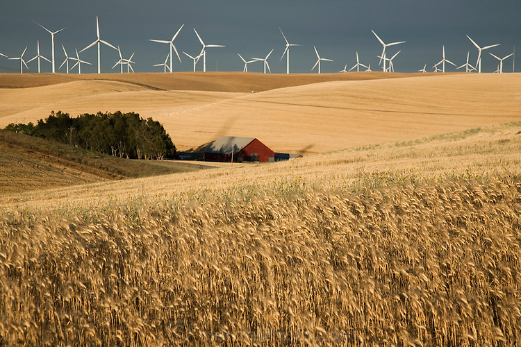 Wind turbines tower over a wheat field at a wind farm in Birds Landing, California. Each 265-foot wind turbine produces enough electricity per year to power 350 average-size California homes. An old wind powered water pump is at left.