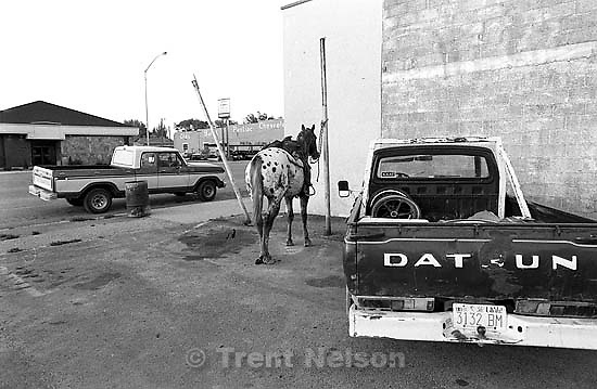 Horse tied up in the parking lot of the Wagon Wheel.<br />