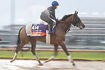 November 1, 2018: Wild Illusion (GB), trained by Charlie Appleby, exercises in preparation for the Breeders' Cup Filly & Mare Turf at Churchill Downs on November 1, 2018 in Louisville, Kentucky. Jamey Price/Eclipse Sportswire/CSM