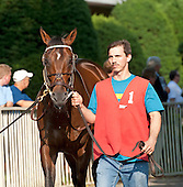Met Mile - Shackleford