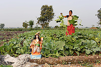 A woman works in fields on the outskirts of Kolkata.<br /> <br /> To license this image, please contact the National Geographic Creative Collection:<br /> <br /> Image ID: 1925831       <br />  <br /> Email: natgeocreative@ngs.org<br /> <br /> Telephone: 202 857 7537 / Toll Free 800 434 2244<br /> <br /> National Geographic Creative<br /> 1145 17th St NW, Washington DC 20036