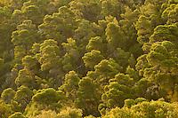 Mediterranean landscape, Alonissos island, Greece