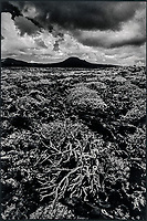 Europe, Espagne, Iles Canaries, Lanzarote:   Paysage volcanique   // Europe, Spain, Canary Islands, Lanzarote: Volcanic landscape
