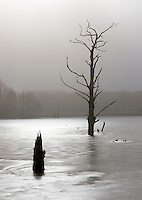 Germany, DEU, Waltrop, 2005-Mar-05: Dead trees in a frozen pond.