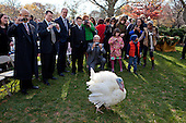 Apple, the National Thanksgiving Turkey, is photographed by guests attending a ceremony where President Barack Obama pardoned the turkey in the Rose Garden of the White House, November 24, 2010..Mandatory Credit: Chuck Kennedy - White House via CNP