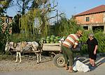 ALBANIA, Lushnje, man selling watermelons from donkey wagon / ALBANIEN, Bauer verkauft Melonen vom Eselkarren