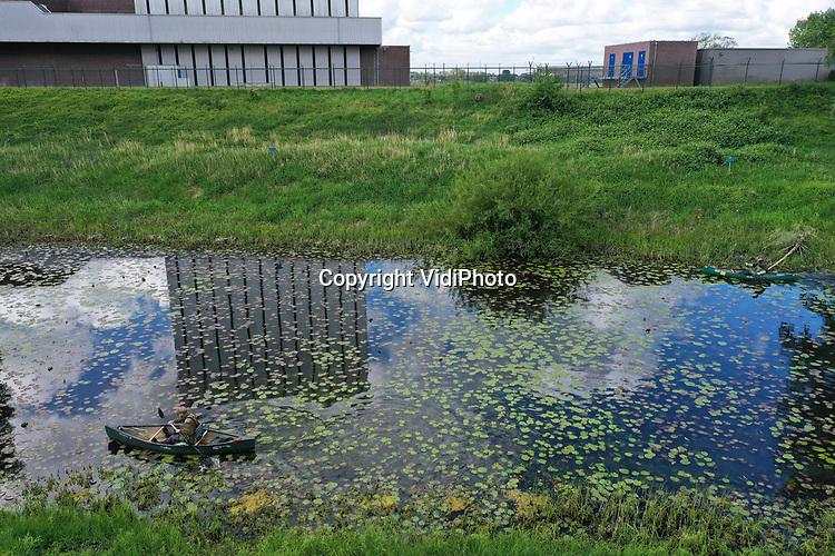 Foto: VidiPhoto<br /> <br /> DODEWAARD - Rattenvangers Martin van Tongeren (57) en Nick van Binsbergen (25) van Waterschap Rivierenland inspecteren dinsdag de oevers van de Strang langs de Waal bij Dodewaard op de bouw (nesten) van muskusratten. Er wordt niets gevonden. De muskusrat is langs de grote rivieren zover teruggedrongen dat slechts af en toe nog maar een bouw wordt ontdekt. In de 3000 kilometer aan watergangen in de Betuwe leeft nog maar een handjevol ratten. In het grensgebied is het probleem groter. Met name de grotere beverrat komt nog steeds vanuit Duitsland Nederland binnen. Daarom heeft het waterschap alle sloten, vaarten en rivieren vanuit dat land afgegrendeld met vangmiddelen. In 2035 mogen er in heel Nederland niet meer dan 500 muskusratten over zijn. Muskusratten ondergraven dijken en weilanden en bedreigen zo de veiligheid van het Rivierengebied. Daarnaast veroorzaken ze schade aan landbouwgewassen.