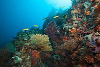 Bull Point Reef Scenic<br /> US Virgin Islands