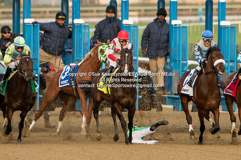 January 2 2016: Donegal Moon unseats rider Manuel Franco as Flexibility with Irad Ortiz Jr. win the 146th running of the Grade III Jerome Stakes for 3-year olds, going 1 mile & 70 yards at Aqueduct Racetrak.  Trainer Chad C. Brown. Owner Klaravich Stables & William H. Lawrence. Sue Kawczynski/ESW/CSM