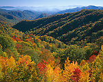 Great Smoky Mountains National Park, TN/NCF<br /> Fall colors on the folded hills of Shot Beech Ridge above the distant haze over Deep Creek Valley