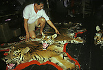 Sumatran Tiger  skins in a Singapore skin  trader's shop.  <br /> This man claimed that he could supply 15 skins a month  which  effcetively would wipe out  the entire Sumatran Tiger population.
