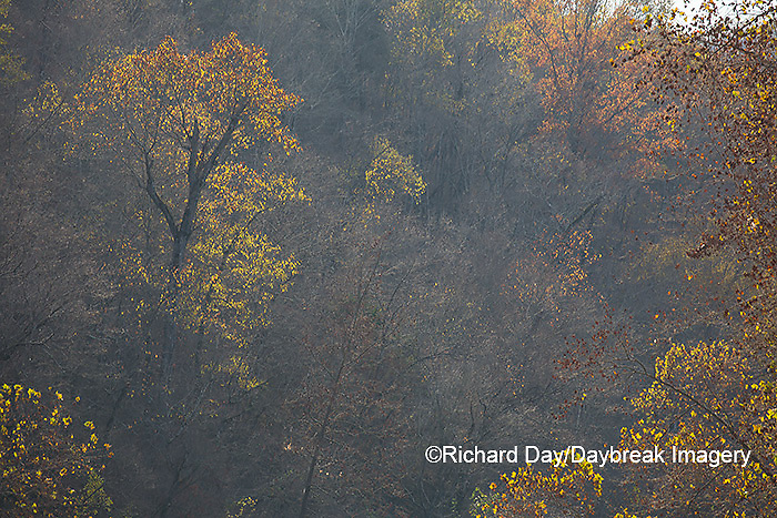 65045-01112 Trees in fall, Ozark National Scenic Riverway near Akers Ferry, MO