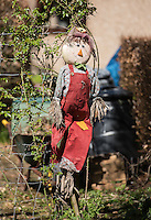 Chipping in Bloom. Scarecrow.