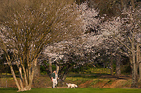 A couple walks among the flowering trees in Freedom Park in Charlotte, NC.