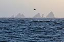 Black-browed Albatross (Thalassarche melanophris) over Shag Rocks, South Georgia, South Atlantic Ocean. November.