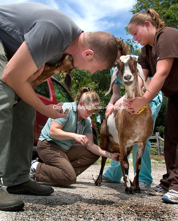 BETHANY, CT. 15  June 2010-061510SV08-Dr. Kimberly McClure, center, works on Mike Hearl's goat &quot;Selebration&quot; with her two assistants Chelsea Moruzzi and  Stacy Bowers, right, during an exam at her office in Bethany Tuesday.<br /> Steven Valenti Republican-American