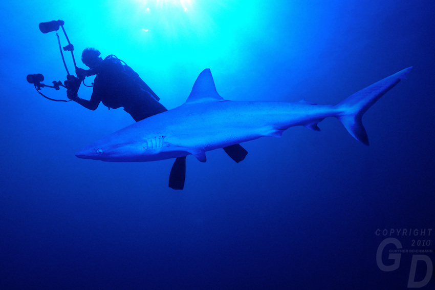 Underwater marine life and diving,Underwater Photographer