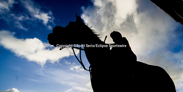 January 24, 2020: Horses jog and gallop on the main track shortly after sunrise as preparations continue for the Pegasus World Cup Invitational at Gulfstream Park Race Track in Hallandale Beach, Florida. Scott Serio/Eclipse Sportswire/CSM