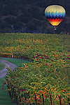 Hot air balloon sails over the vineyards of Yountville in Napa Valley California just before sunrise.