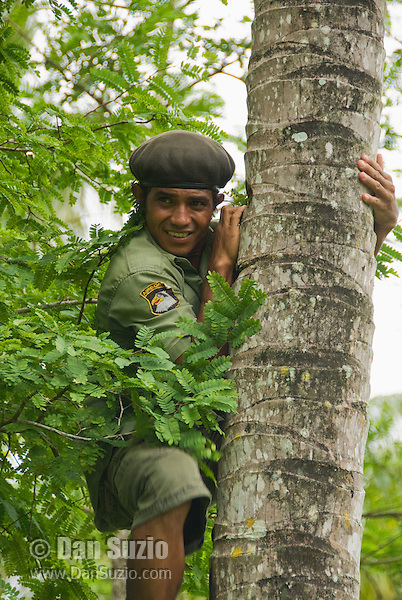 Timorese student Laca Ribeiro climbs a palm tree to harvest coconuts on Atauro Island, Timor-Leste (East Timor)