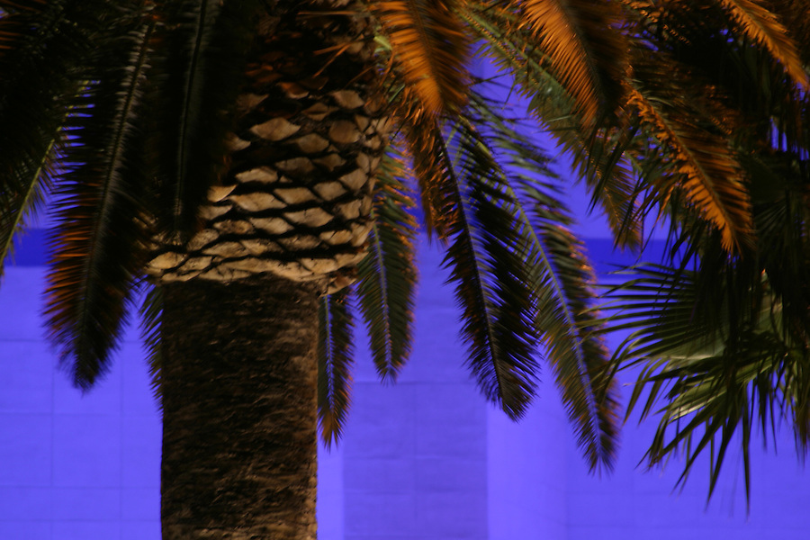 Palm tree at night with purple blue background, Las Vegas, Clark County, NV