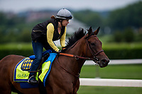 ELMONT, NY - JUNE 07: Abel Tasman with Dana Barnes gallops at Belmont Park on June 07, 2018 in Elmont, New York. (Photo by Alex Evers/Eclipse Sportswire/Getty Images)