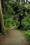 Forest trail in Stanley Park,Vancouver, British Columbia, Canada